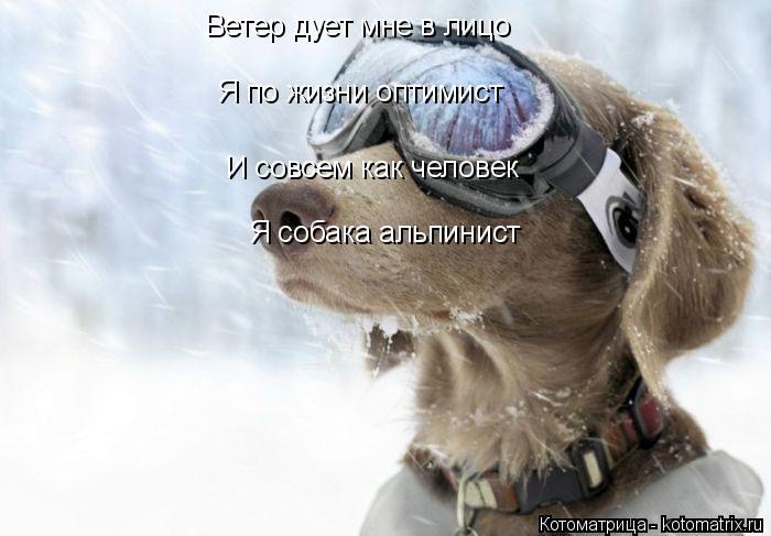 Котоматрица: Ветер дует мне в лицо  Я по жизни оптимист  И совсем как человек  Я собака альпинист