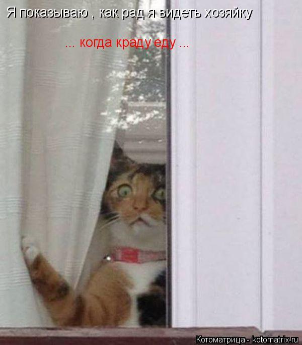 Котоматрица: Я показываю , как рад я видеть хозяйку ... когда краду еду ...