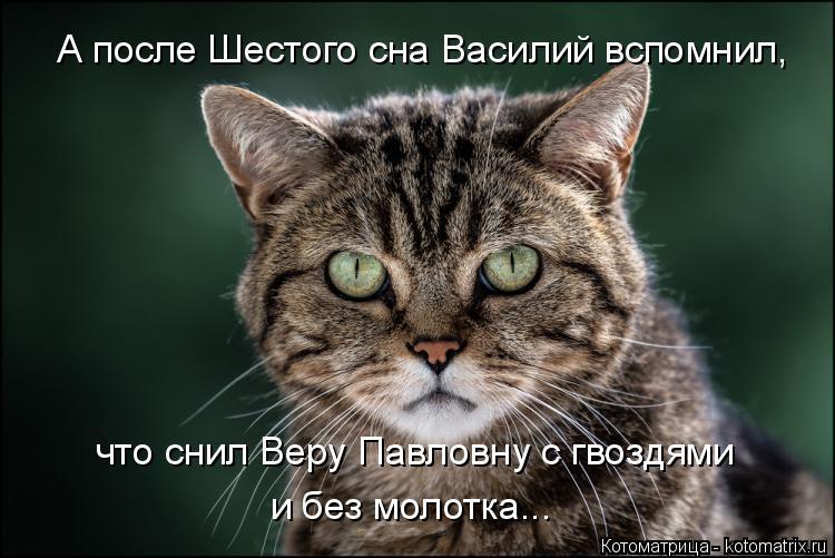 Котоматрица: А после Шестого сна Василий вспомнил, что снил Веру Павловну с гвоздями  и без молотка...