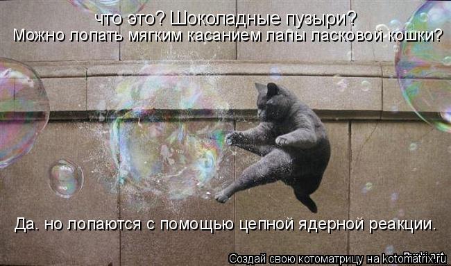 Котоматрица: что это? Шоколадные пузыри? Можно лопать мягким касанием лапы ласковой кошки? Да. но лопаются с помощью цепной ядерной реакции.