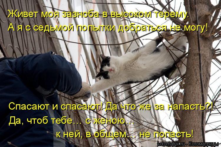 Котоматрица: Живет моя зазноба в высоком терему. А я с седьмой попытки добраться не могу! Спасают и спасают! Да что же за напасть?! Да, чтоб тебе… с женою…