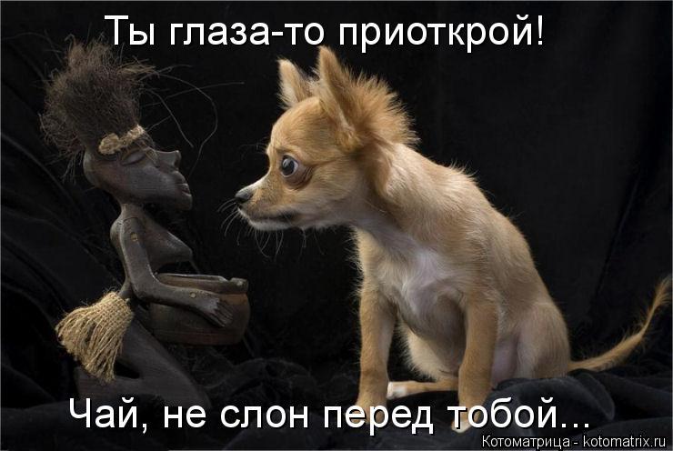 Котоматрица: Ты глаза-то приоткрой! Чай, не слон перед тобой...