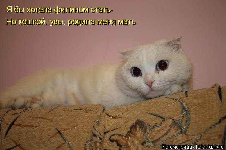 Котоматрица: Я бы хотела филином стать- Но кошкой, увы, родила меня мать