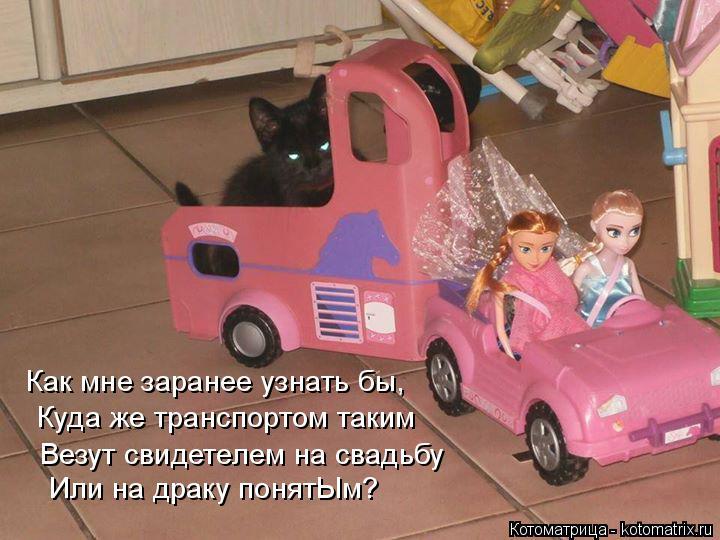 Котоматрица: Как мне заранее узнать бы,  Куда же транспортом таким Везут свидетелем на свадьбу Или на драку понятЫм?