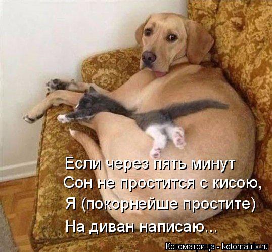 Котоматрица: Если через пять минут Сон не простится с кисою, Я (покорнейше простите)  На диван написаю...