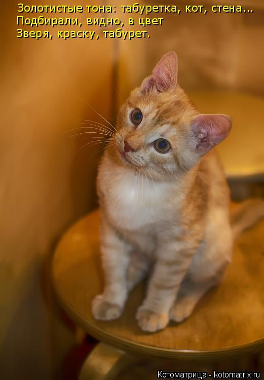 Котоматрица: Золотистые тона: табуретка, кот, стена... Подбирали, видно, в цвет  Зверя, краску, табурет.