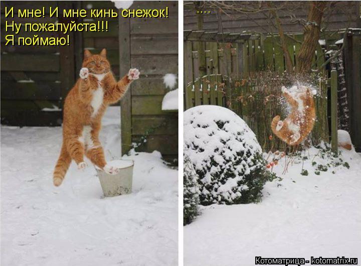 Котоматрица: И мне! И мне кинь снежок! Ну пожалуйста!!! Я поймаю! ....