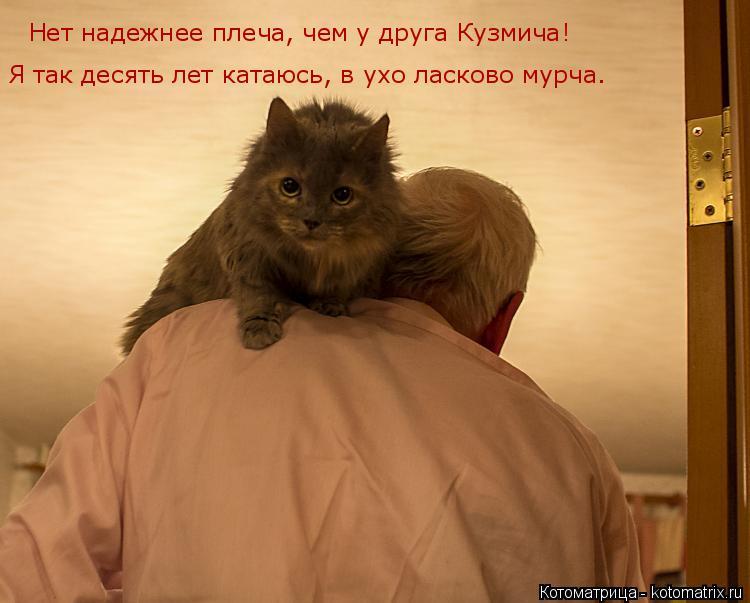 Котоматрица: Нет надежнее плеча, чем у друга Кузмича! Я так десять лет катаюсь, в ухо ласково мурча.