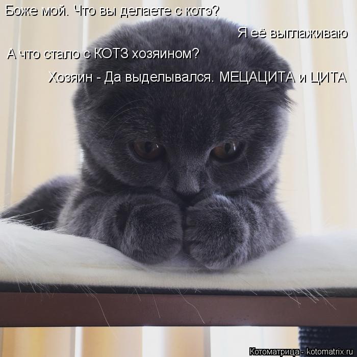 Котоматрица: Боже мой. Что вы делаете с котэ? Я её выглаживаю А что стало с КОТЗ хозяином? Хозяин - Да выделывался. МЕЦАЦИТА и ЦИТА