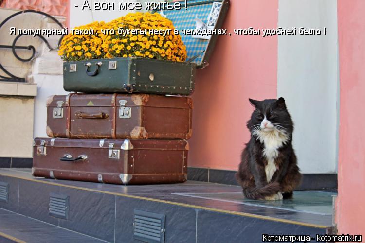 Котоматрица: - А вон мое житье ! Я популярный такой , что букеты несут в чемоданах , чтобы удобней было !