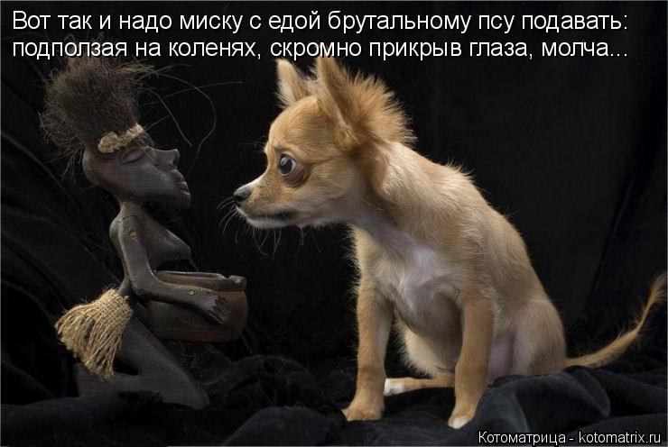 Котоматрица: Вот так и надо миску с едой брутальному псу подавать: подползая на коленях, скромно прикрыв глаза, молча...