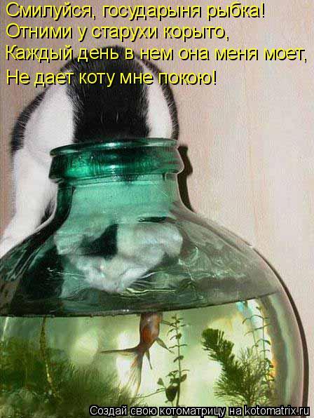 Котоматрица: Смилуйся, государыня рыбка! Отними у старухи корыто, Каждый день в нем она меня моет, Не дает коту мне покою!