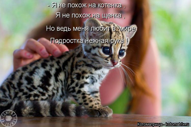 Котоматрица: - Я не похож на котенка , Я не похож на щенка , Но ведь меня любит в  мире  Подростка нежная рука !