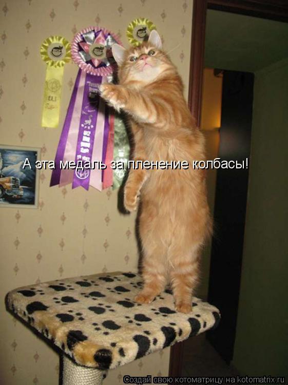 Котоматрица: А эта медаль за пленение колбасы!
