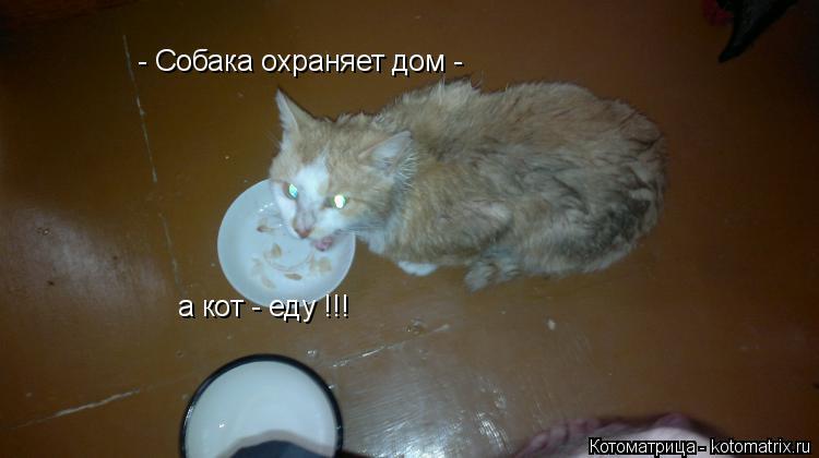 Котоматрица: - Собака охраняет дом - а кот - еду !!!