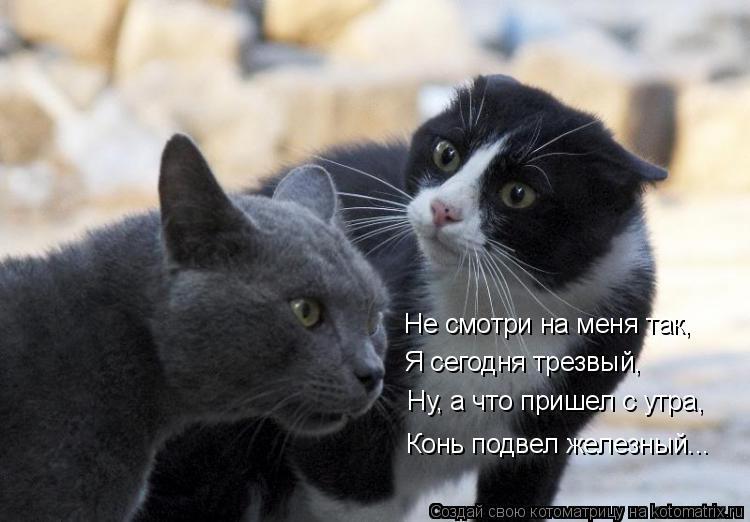 Котоматрица: Не смотри на меня так, Я сегодня трезвый, Ну, а что пришел с утра, Конь подвел железный...