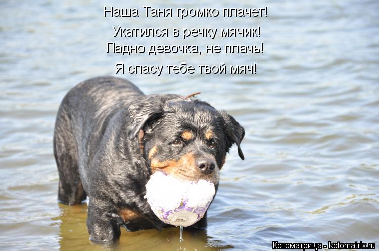 Котоматрица: Наша Таня громко плачет! Ладно девочка, не плачь! Я спасу тебе твой мяч! Укатился в речку мячик!