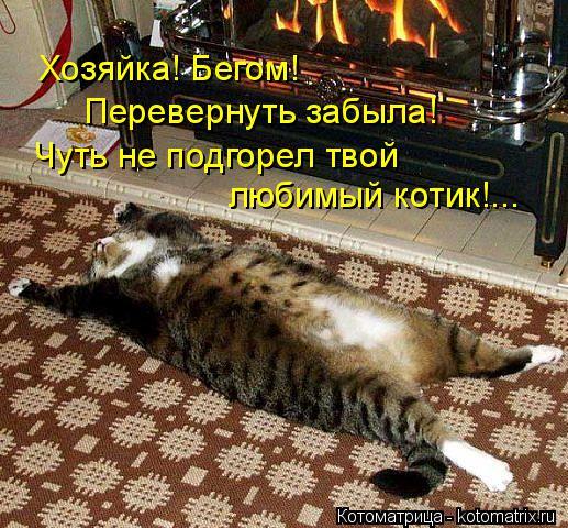 Котоматрица: Хозяйка! Бегом!   Перевернуть забыла!  Чуть не подгорел твой  любимый котик!...