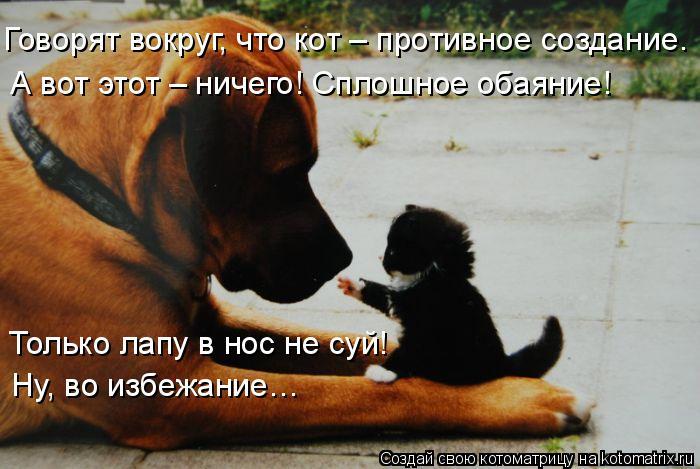 Котоматрица: Говорят вокруг, что кот – противное создание. А вот этот – ничего! Сплошное обаяние! Только лапу в нос не суй!  Ну, во избежание…
