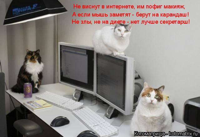 Котоматрица: А если мышь заметят - берут на карандаш! Не виснут в интернете, им пофиг макияж, Не злы, не на диете - нет лучше секретарш!