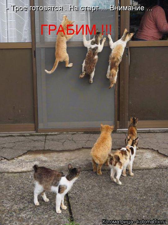 Котоматрица: - Трое готовятся . На старт ... Внимание ... ГРАБИМ !!!