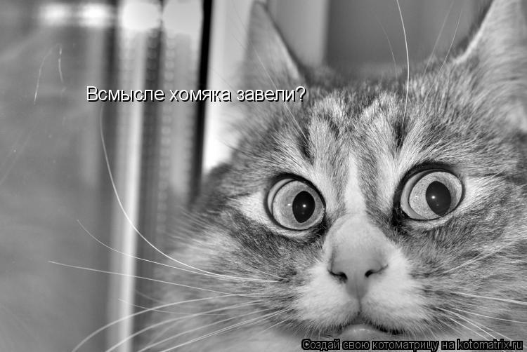 Котоматрица: Всмысле хомяка завели?