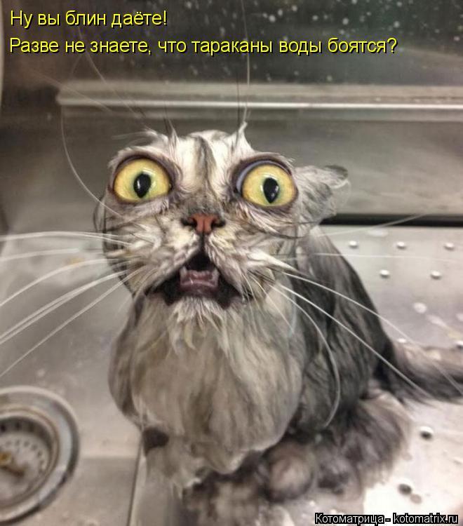 Котоматрица: Ну вы блин даёте! Разве не знаете, что тараканы воды боятся?