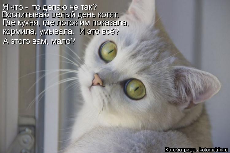 Котоматрица: Я что -  то делаю не так? Где кухня, где лоток им показала, Воспитываю целый день котят. кормила, умывала.  И это всё? А этого вам, мало?