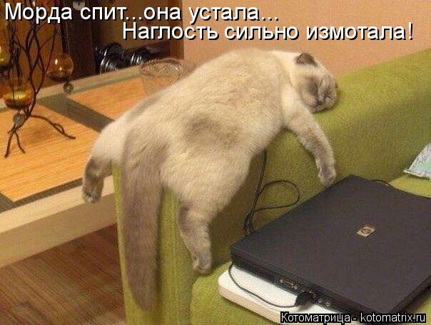 Котоматрица: Морда спит...она устала... Наглость сильно измотала!