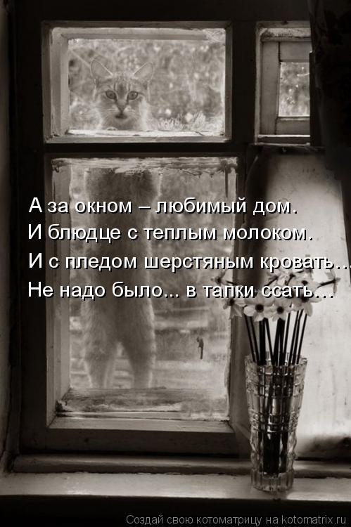 Котоматрица: А за окном – любимый дом. И блюдце с теплым молоком. И с пледом шерстяным кровать… Не надо было... в тапки ссать…