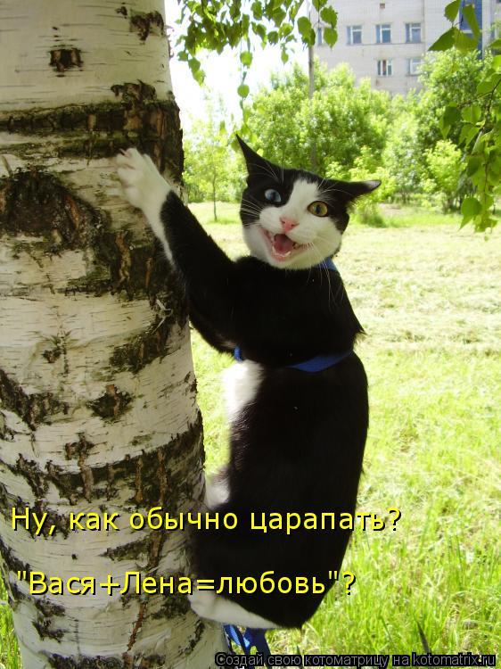 """Котоматрица: Ну, как обычно царапать? """"Вася+Лена=любовь""""?"""