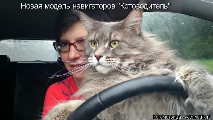 """Котоматрица: Новая модель навигаторов """"Котоводитель"""""""