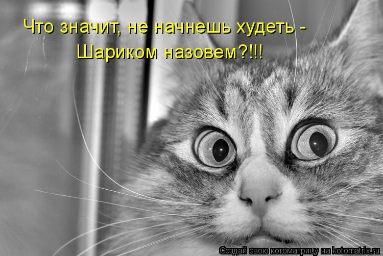 Котоматрица: Что значит, не начнешь худеть - Шариком назовем?!!!