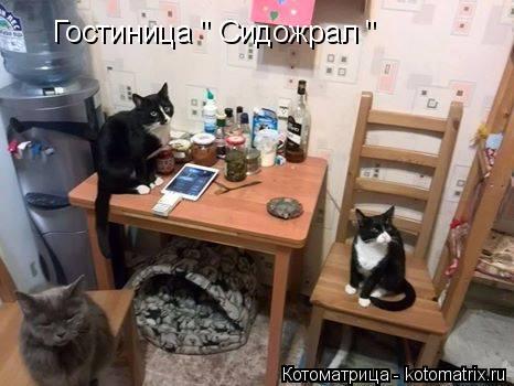 "Котоматрица: Гостиница "" Сидожрал """