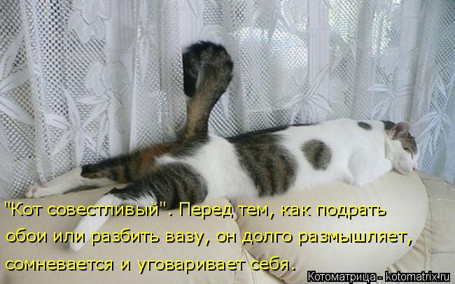 """Котоматрица: """"Кот совестливый"""". Перед тем, как подрать обои или разбить вазу, он долго размышляет,  сомневается и уговаривает себя."""