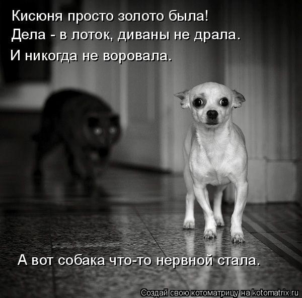 Котоматрица: Кисюня просто золото была! Дела - в лоток, диваны не драла. И никогда не воровала. А вот собака что-то нервной стала.