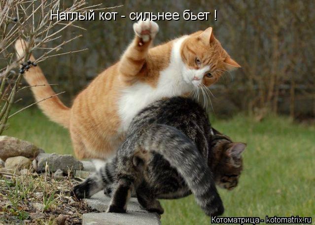 Котоматрица: Наглый кот - сильнее бьет !