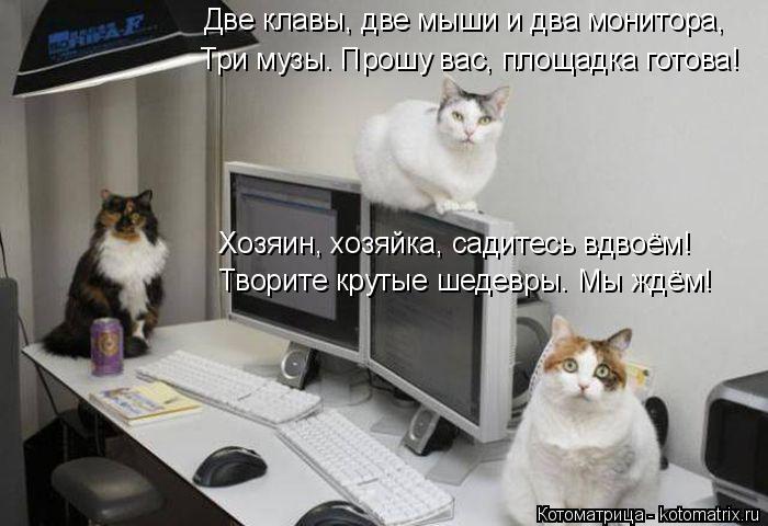 Котоматрица: Две клавы, две мыши и два монитора, Три музы. Прошу вас, площадка готова! Хозяин, хозяйка, садитесь вдвоём! Творите крутые шедевры. Мы ждём!