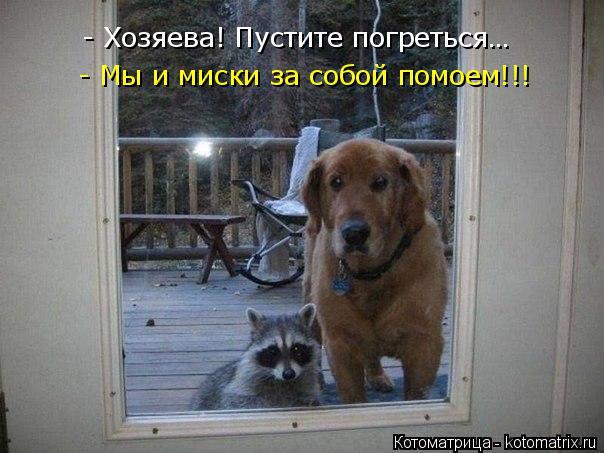 Котоматрица: - Хозяева! Пустите погреться… - Мы и миски за собой помоем!!!