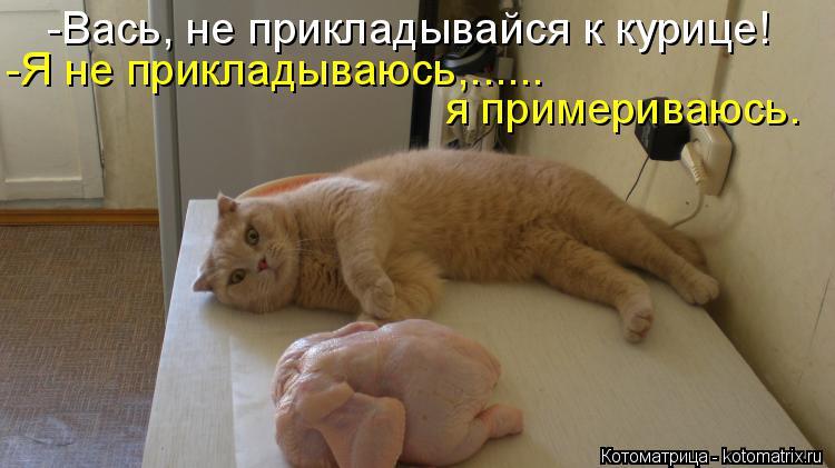 Котоматрица: -Вась, не прикладывайся к курице! -Я не прикладываюсь,...... я примериваюсь.