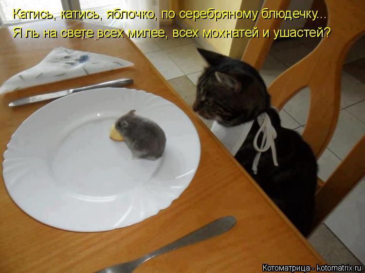Котоматрица: Катись, катись, яблочко, по серебряному блюдечку... Я ль на свете всех милее, всех мохнатей и ушастей?