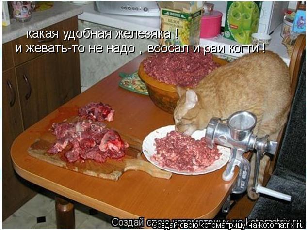 Котоматрица: какая удобная железяка ! и жевать-то не надо , всосал и рви когти !