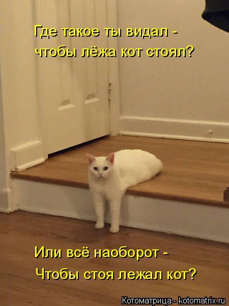 Котоматрица: Где такое ты видал -  Чтобы стоя лежал кот? чтобы лёжа кот стоял? Или всё наоборот -