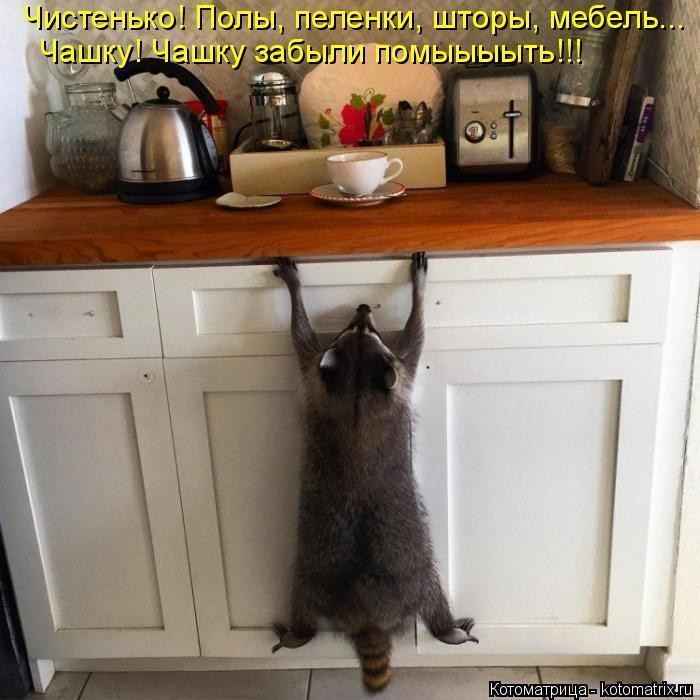 Котоматрица: Чистенько! Полы, пеленки, шторы, мебель... Чашку! Чашку забыли помыыыыть!!!