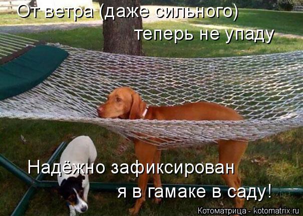 Котоматрица: От ветра (даже сильного) теперь не упаду Надёжно зафиксирован я в гамаке в саду!
