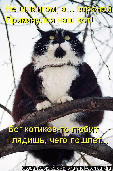 Котоматрица: Глядишь, чего пошлет... Бог котиков-то любит. Не шлангом, а... вороной Прикинулся наш кот!