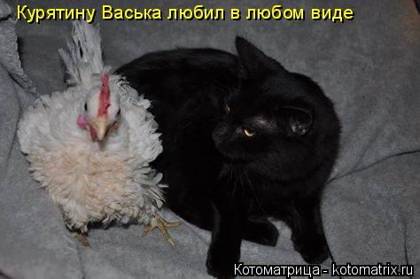 Котоматрица: Курятину Васька любил в любом виде