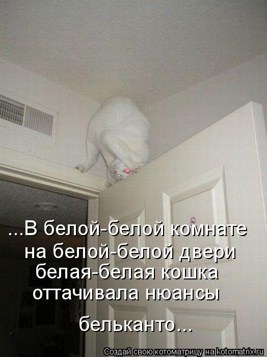 Котоматрица: ...В белой-белой комнате на белой-белой двери белая-белая кошка оттачивала нюансы  бельканто...