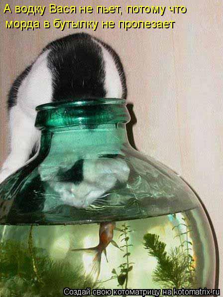 Котоматрица: А водку Вася не пьет, потому что  морда в бутылку не пролезает