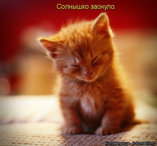 Котоматрица: Солнышко заснуло.